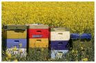Bienenkörbe...