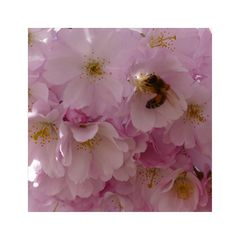 Bienenparadies