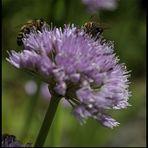 Bienentreff auf...