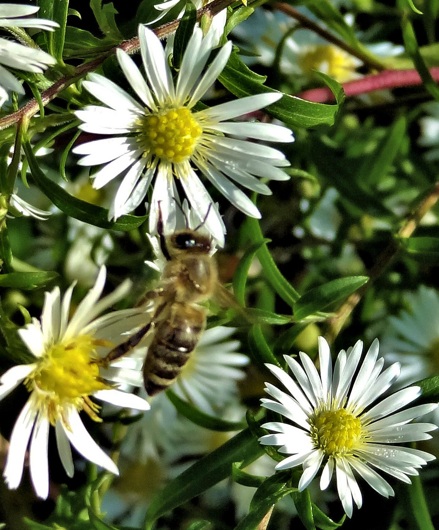 bienenwetter im oktober