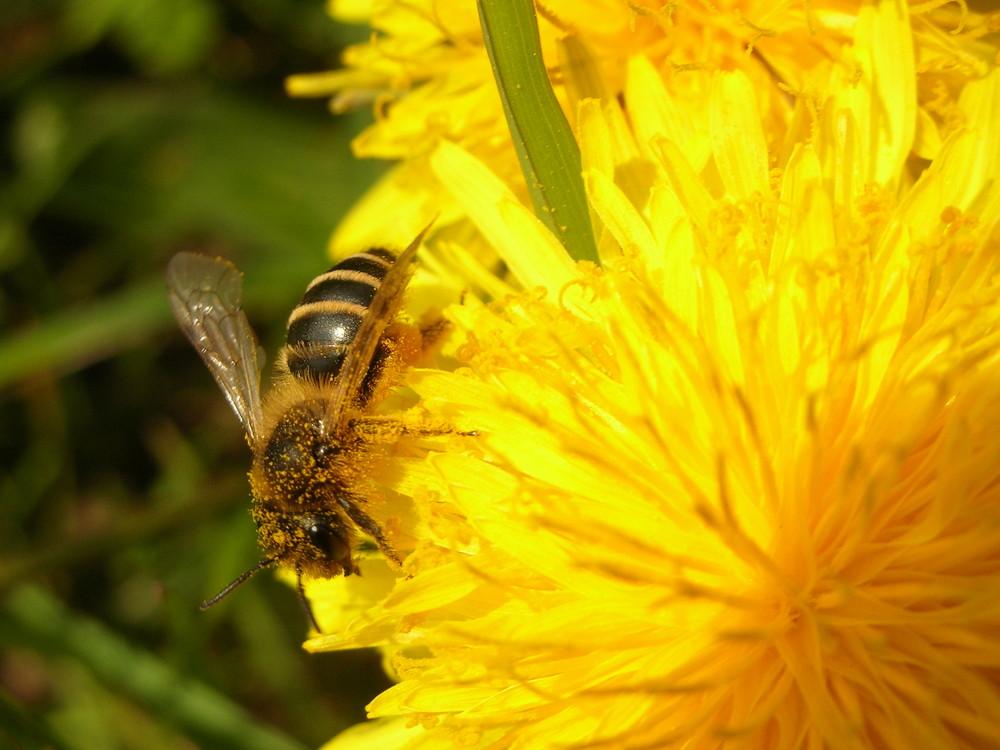 Biensche und Blümsche