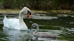 Bienveillance maternelle