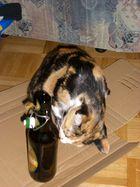 Bier schmeckt ! Ehrlich ! Jedenfalls meiner Katze