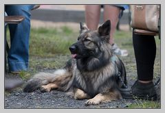 Biergarten - auch Hunde fühlen sich dort wohl