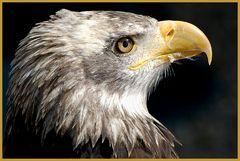 Big Adler is watching you