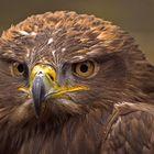 Big bird......
