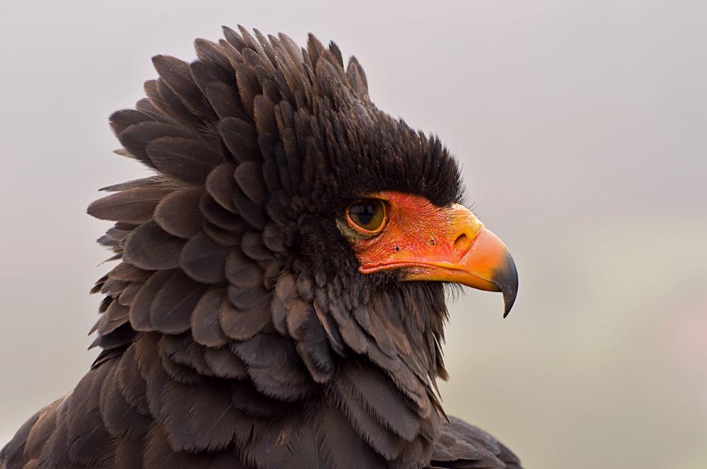 Big bird....