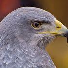 Big bird........