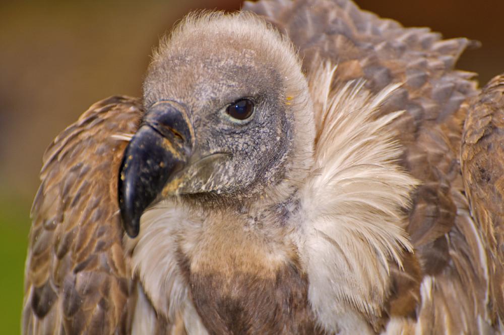 Big bird...