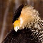 Big bird.........