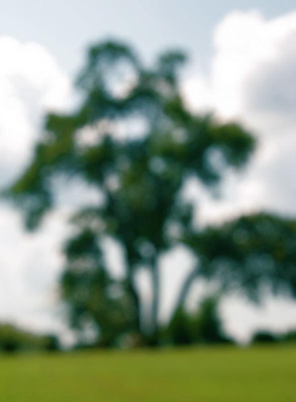 big blurry tree