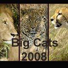 *Big Cats* - Kalender 2008
