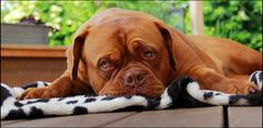 Big dog is watching you .....