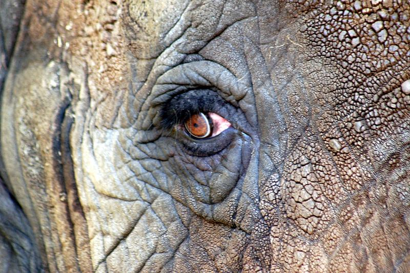 Big-Eye