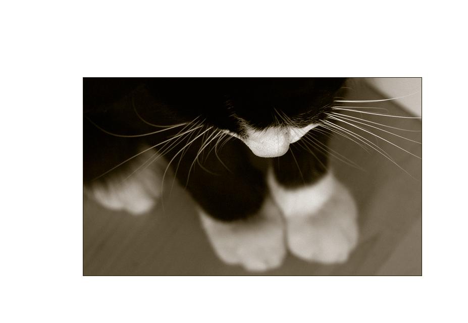 Big Feet...