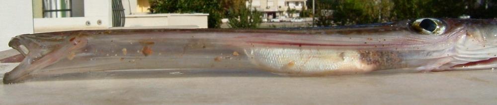 big fish swallows up little fish