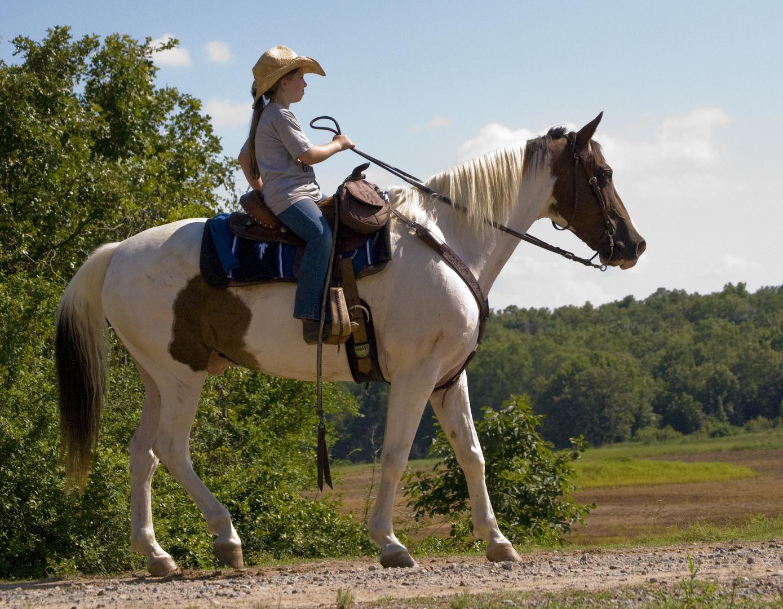 BIG HORSE-LITTLE LADY