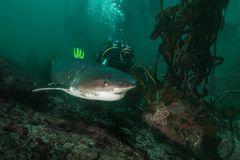 Big-Mom und Nancy, die Meeresbiologin...