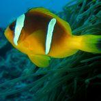 Big Nemo 2 Versuch