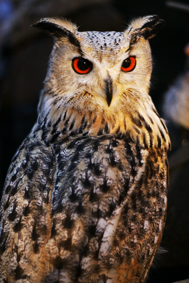 Big owl is watching you!