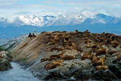 Big rush near Ushuaia