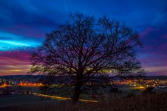 Big Tree bei Nacht