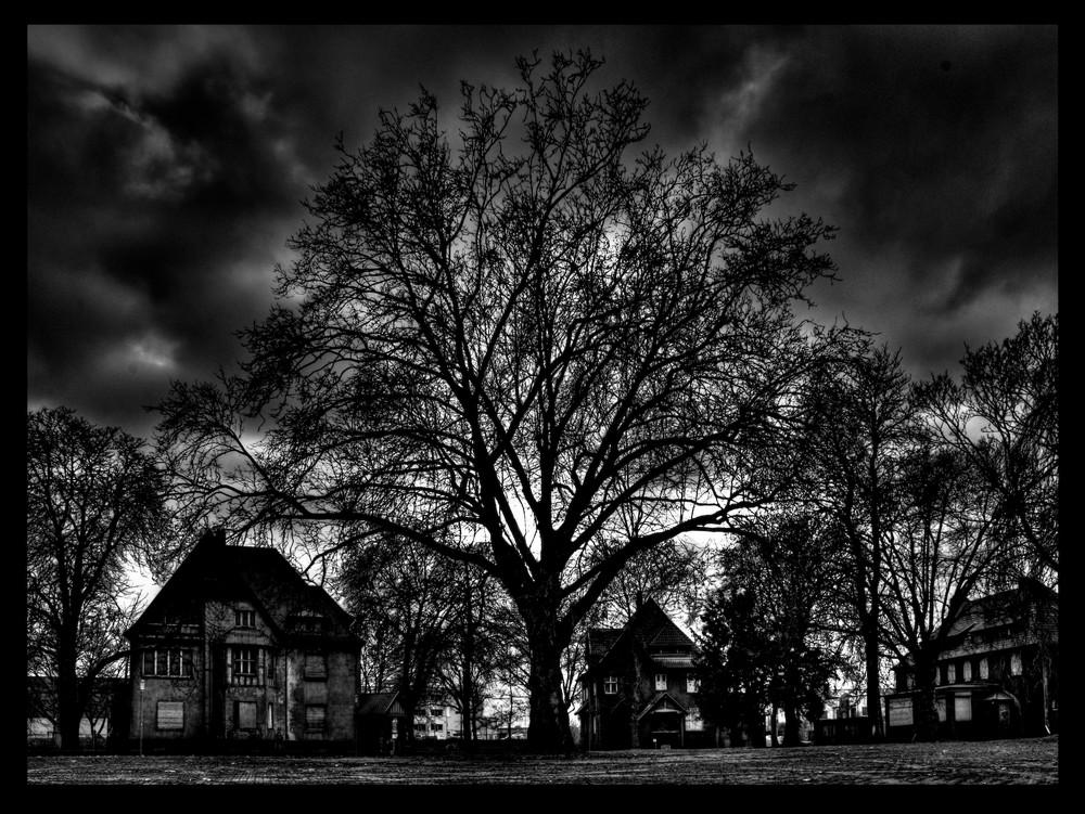 ...big tree Krupp Villen...