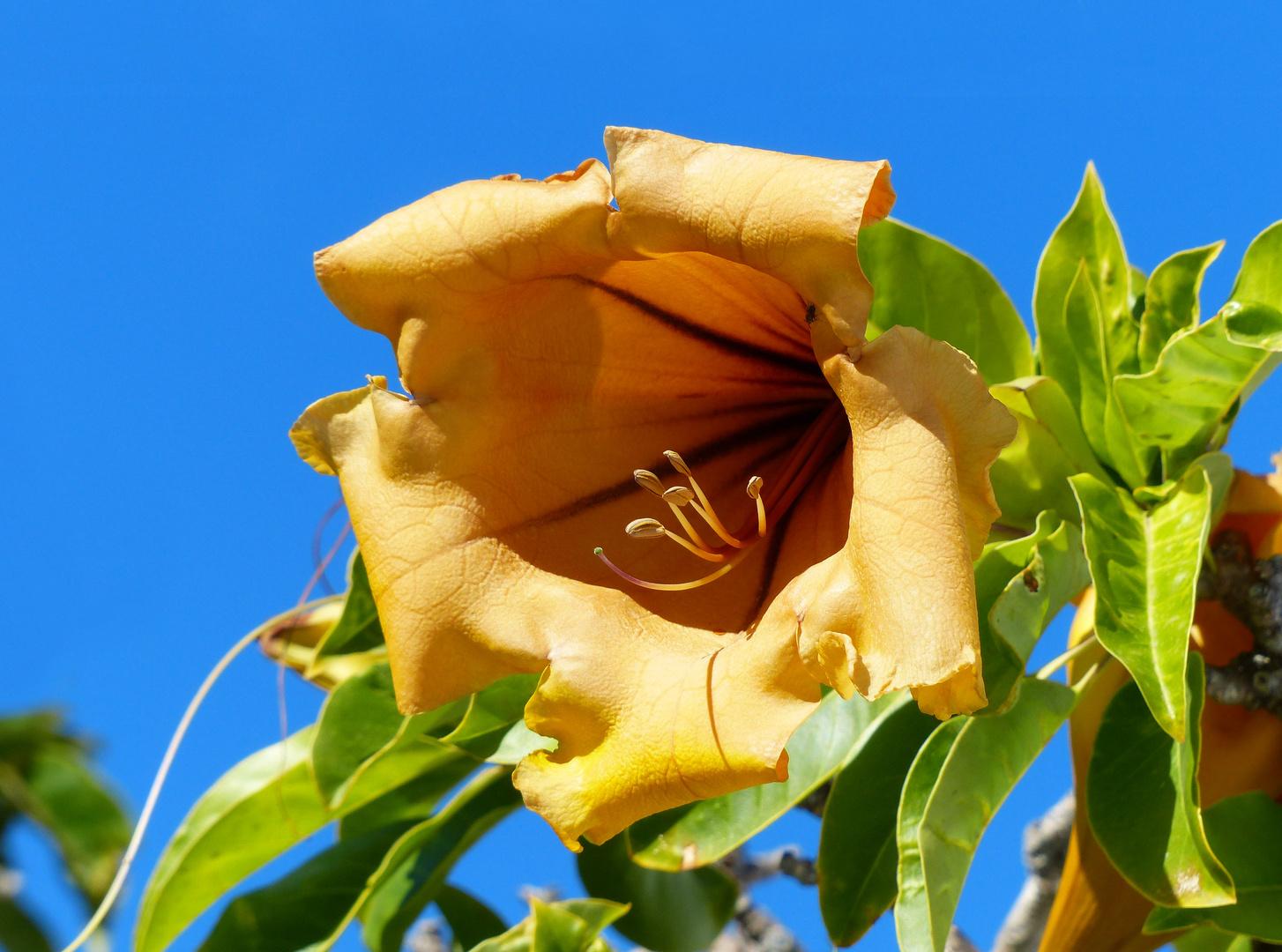 Big Yellow Exotic Flower Photo Image Flowers Nature Spain