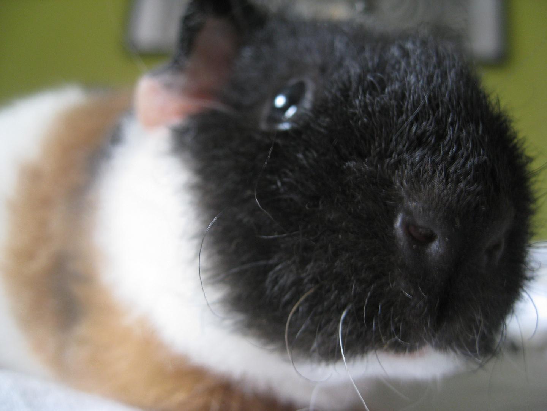Bijou, close up