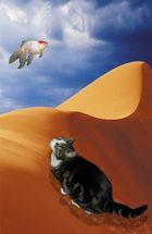 Bild 1 : Fata Morgana unserer Katze