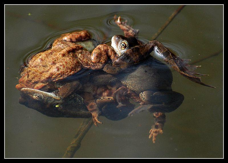 Bild entlarvt: Gruppensex  auch bei Tieren!