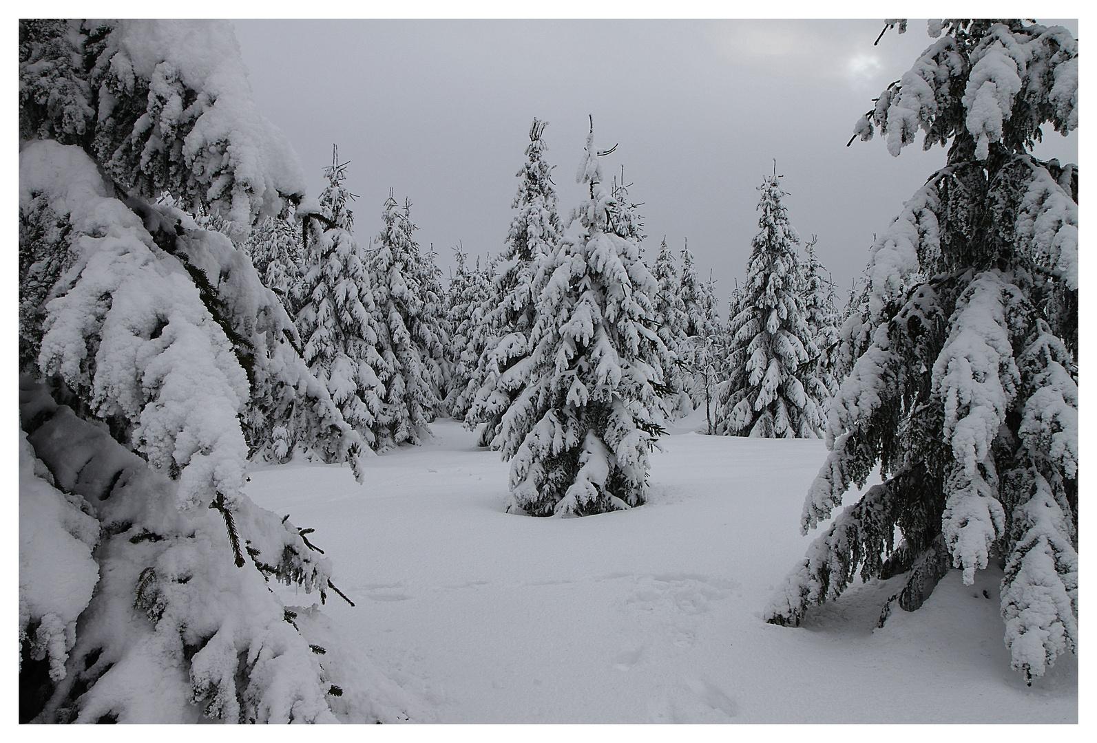 Bild im Winter