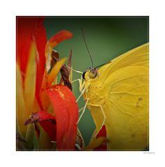 Bild mit Schmetterling