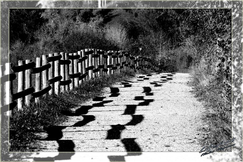 Bild-Nr.: PA 2011-0189 / Zaun und Weg