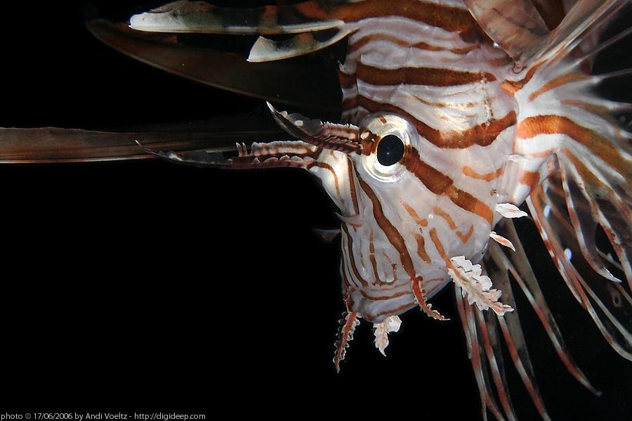Bildaufteiler ( Pterois Terror )