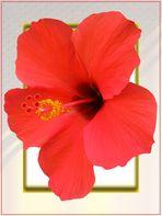 Bildbearbeitung mit Hibiskusblüte