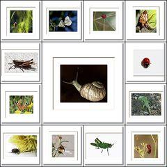 Bilder einer Ausstellung**