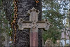 Bilder vom alten Friedhof 01