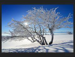 Bilderbuch Wintermorgen