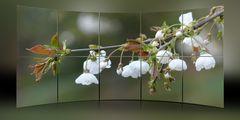Bilderwand Frühlingsblüten