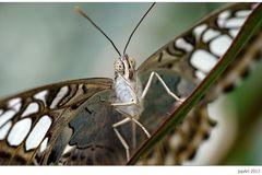 Bildmittenbezogene Diagonale mit  Eckläufer und schielendem Schmetterling...
