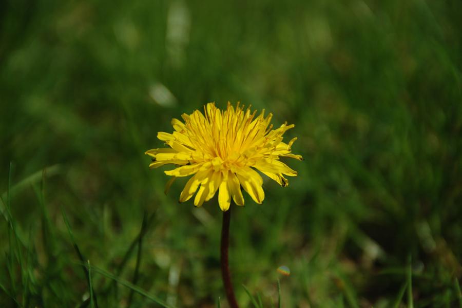 Bildschirmhintergrund für den Frühling