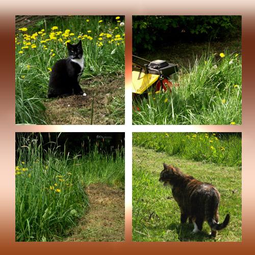 Bin Im Garten Foto Bild Quatsch Fun Und Rätselecke