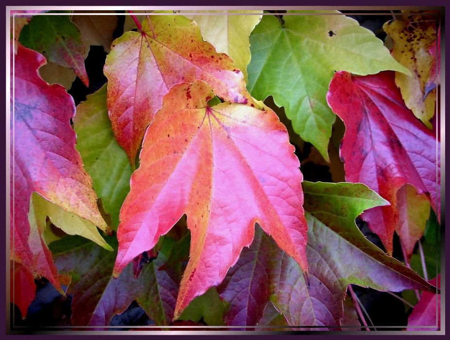 Bin Wieder Da Foto Bild Jahreszeiten Herbst Blütenbäume