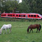 Binolen im Hönnetal , VT 648   ( 856 PS )  und  Zwei  Pferdchen beim grasen........!