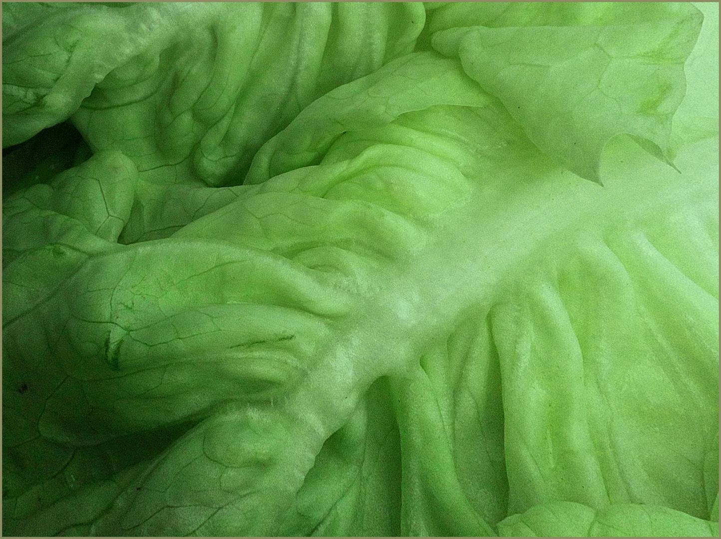 Bio Salat Grün Für Rubie Foto Bild Art Nature Photography