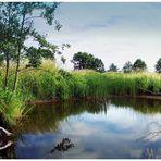 Biotop an der Dänischen Wiek bei Greifswald