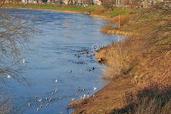 Biotop an der Elbe