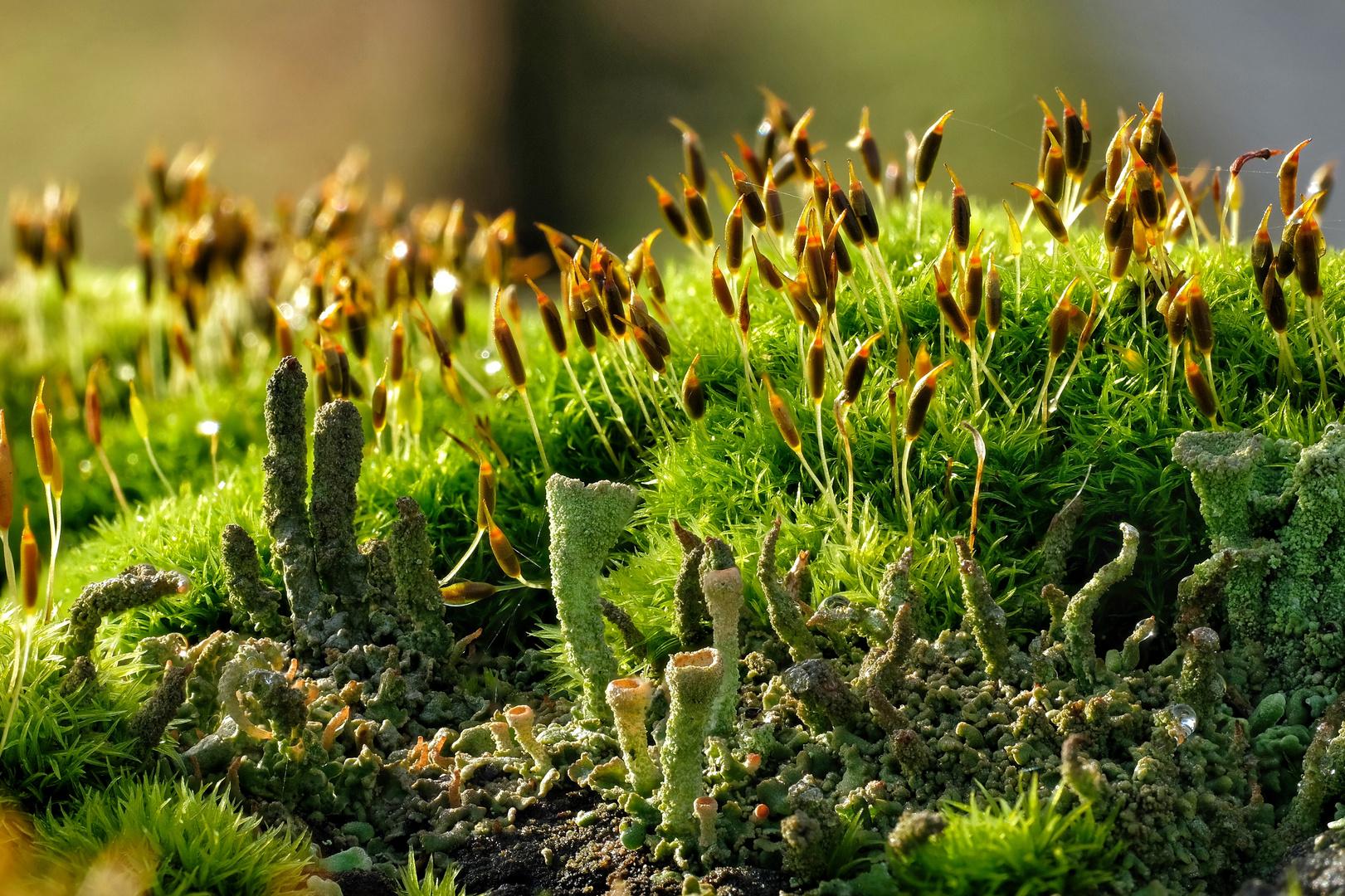 Biotop auf Zaunpfahl