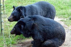 Biowildpark Anholt - Warten auf Futter